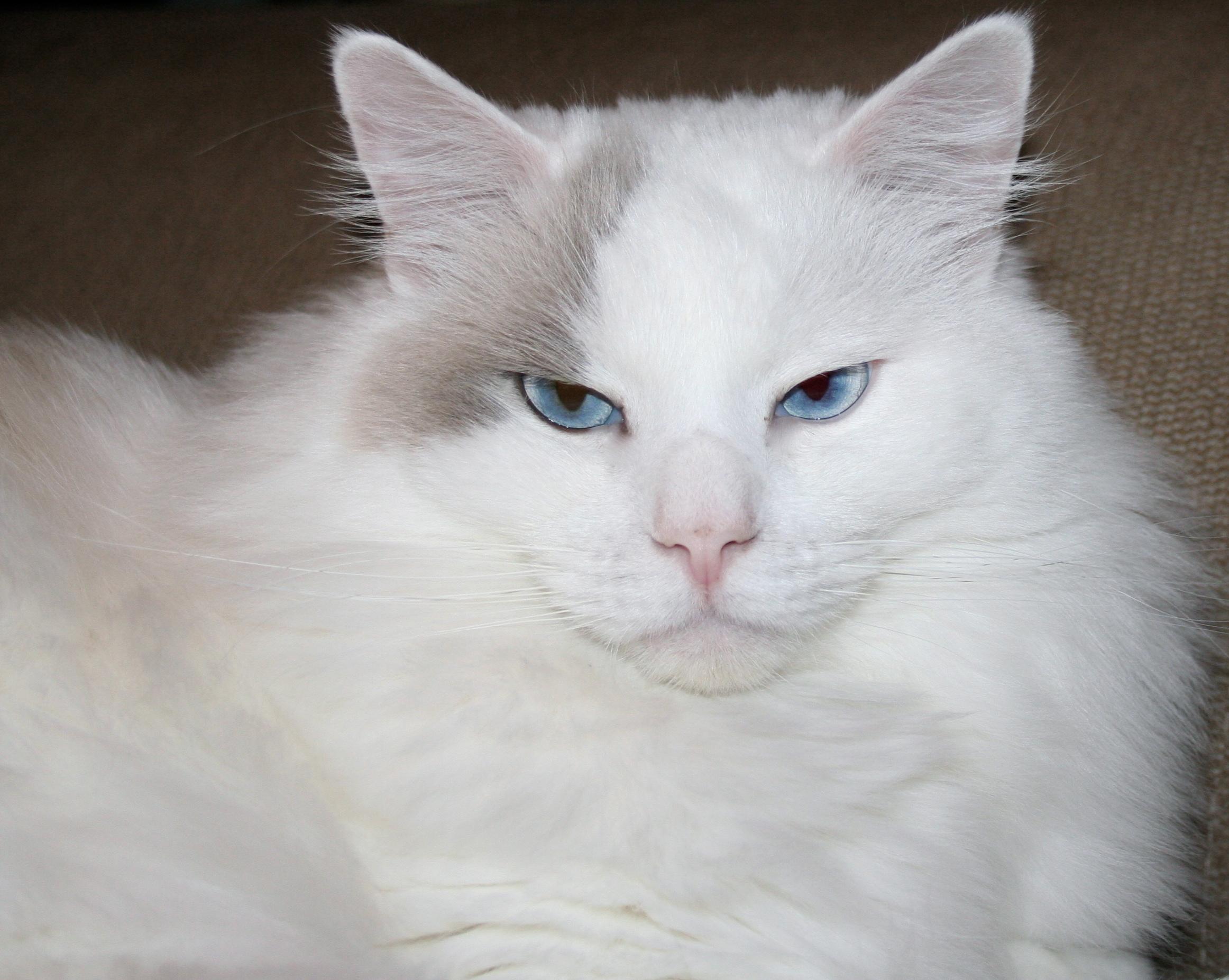 Catlife.se